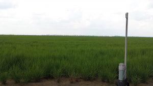 Aquarius water level meter in a rice paddy
